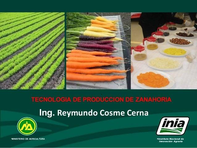 • TECNOLOGIA DE PRODUCCION DE ZANAHORIA •Instituto Nacional de Innovación Agraria •MINISTERIO DE AGRICULTURA Ing. Reymundo...