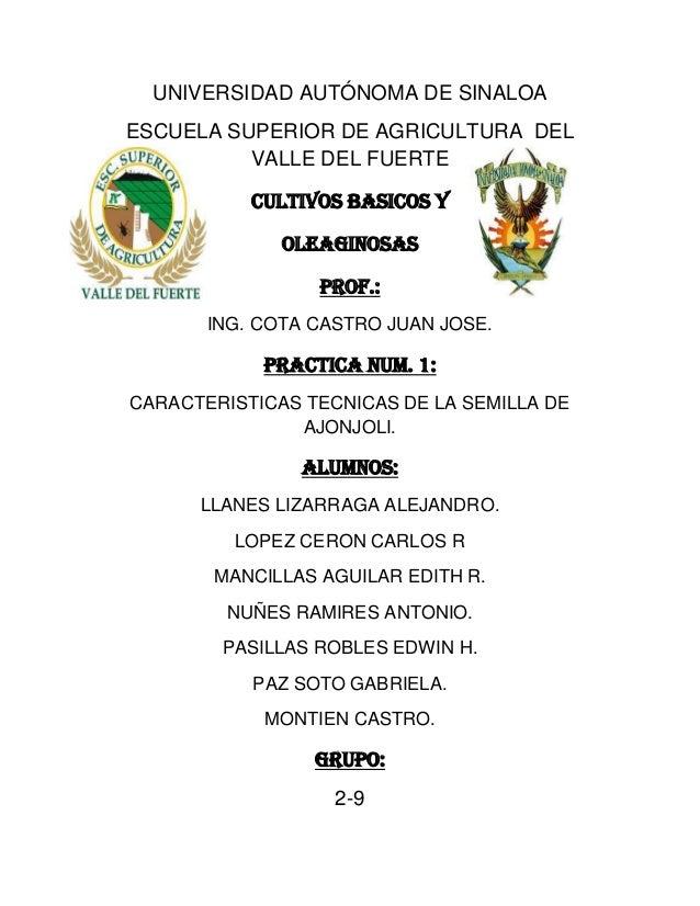 UNIVERSIDAD AUTÓNOMA DE SINALOA ESCUELA SUPERIOR DE AGRICULTURA DEL VALLE DEL FUERTE Cultivos basicos y Oleaginosas Prof.:...