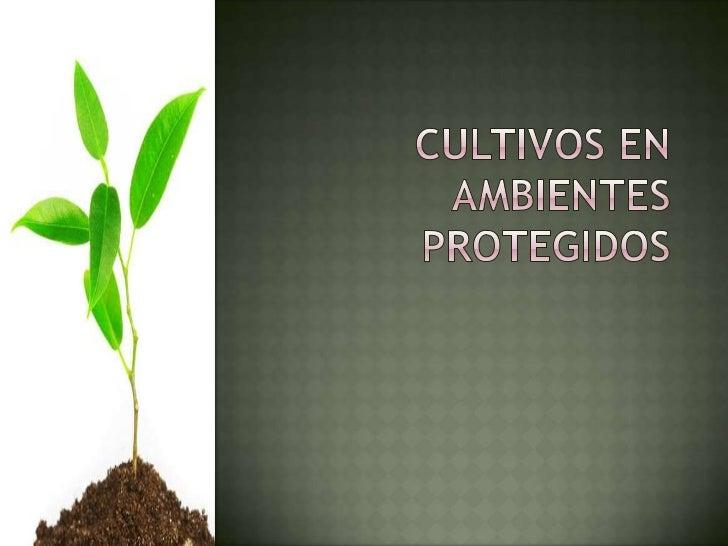 Cultivos en ambientes protegidos