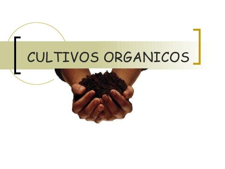 Cultivos Organicos[Estudio