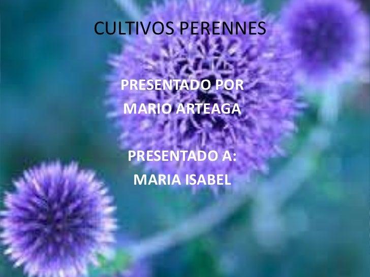 CULTIVOS PERENNES <br />PRESENTADO POR <br />MARIO ARTEAGA <br />PRESENTADO A:<br />MARIA ISABEL <br />