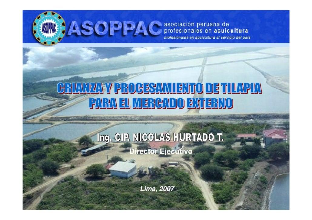 Cultivo y procesamiento de tilapia para exportacion for Estanques para cria de tilapia