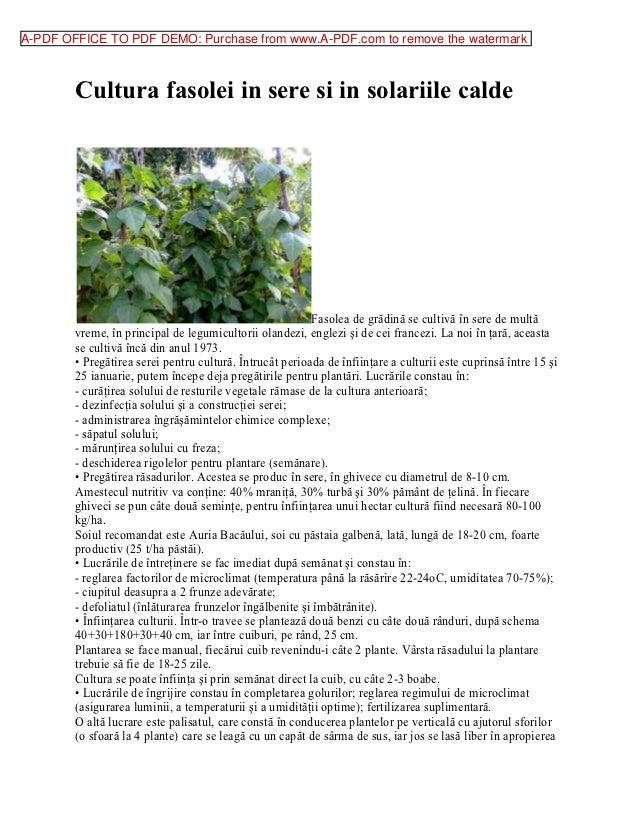 A-PDF OFFICE TO PDF DEMO: Purchase from www.A-PDF.com to remove the watermark        Cultura fasolei in sere si in solarii...