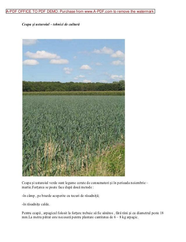 A-PDF OFFICE TO PDF DEMO: Purchase from www.A-PDF.com to remove the watermark        Ceapa şi usturoiul – tehnici de cultu...