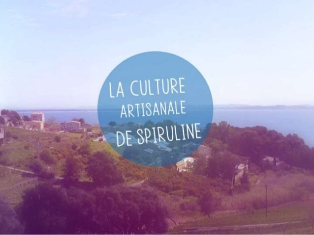 Culture de spiruline artisanale for Chambre de culture artisanale