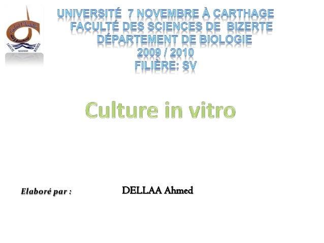 Culture in vitro des plantes