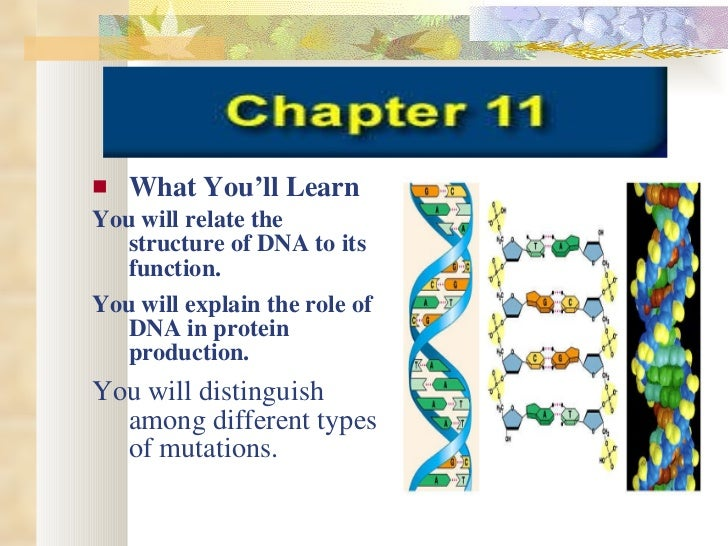 <ul><li>What You'll Learn </li></ul><ul><li>You will relate the structure of DNA to its function. </li></ul><ul><li>You wi...