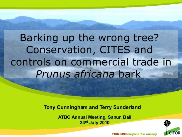Barking up the wrong tree? Conservation, CITES and controls on commercial trade in Prunus africana bark Tony Cunningham an...