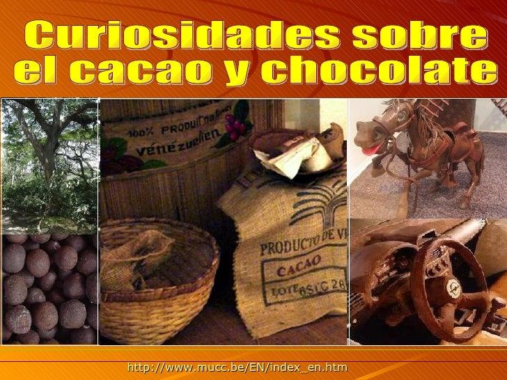Curiosidades cacao y chocolate