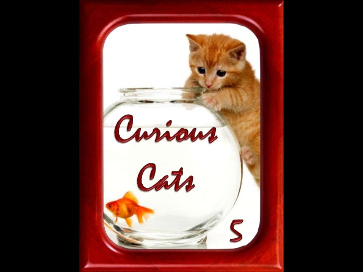 Curious<br />Cats<br />5<br />