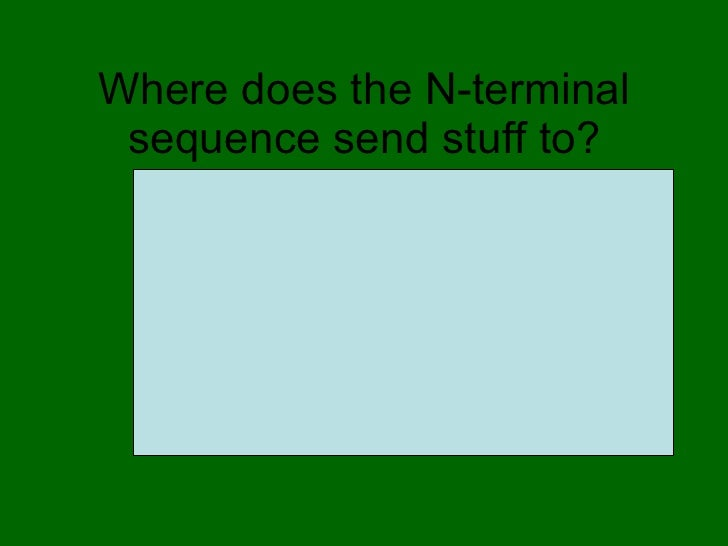 Where does the N-terminal sequence send stuff to? <ul><li>Mitochondria </li></ul>
