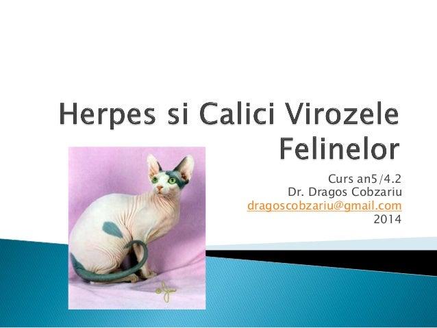 Curs an5/4.2 Dr. Dragos Cobzariu dragoscobzariu@gmail.com 2014