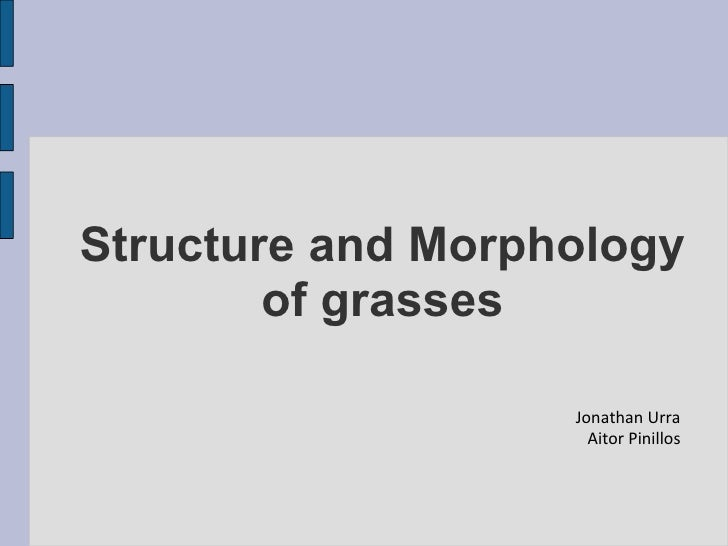Structure and Morphology of grasses Jonathan Urra Aitor Pinillos