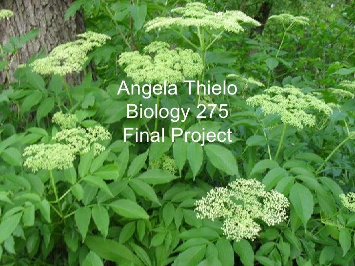 Angela Thielo  Biology 275 Final Project