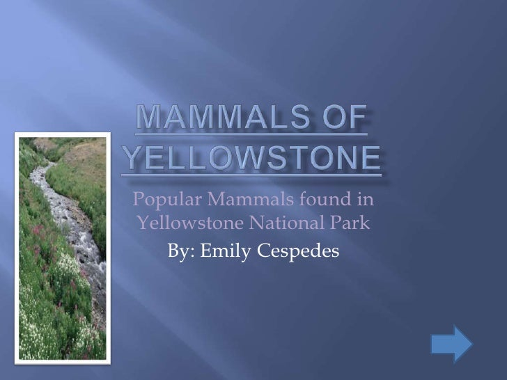 Popular Mammals found in Yellowstone National Park    By: Emily Cespedes