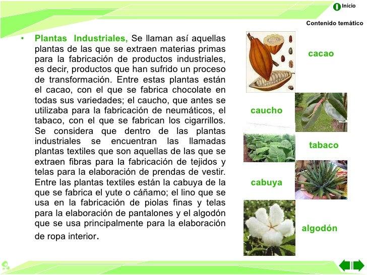 Las partes de la planta for Que son plantas ornamentales