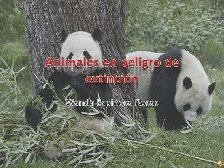 Introducción   Especie en peligro   de extinción    Extinción en    México  Causas básicas  Causas II       Las diez espec...