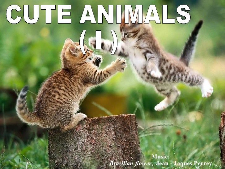 CUTE ANIMALS ( I ) Music: Brazilian flower ,  Jean - Jaques Perrey