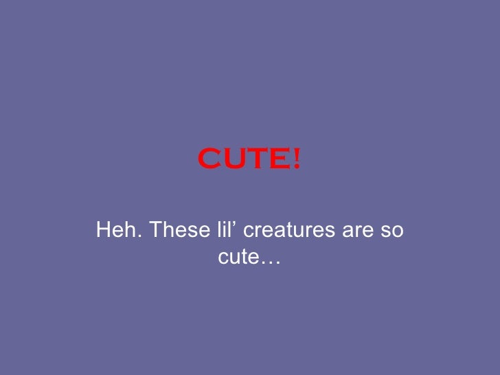 CUTE! Heh. These lil' creatures are so cute…