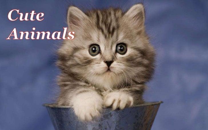 Cute animals 作業