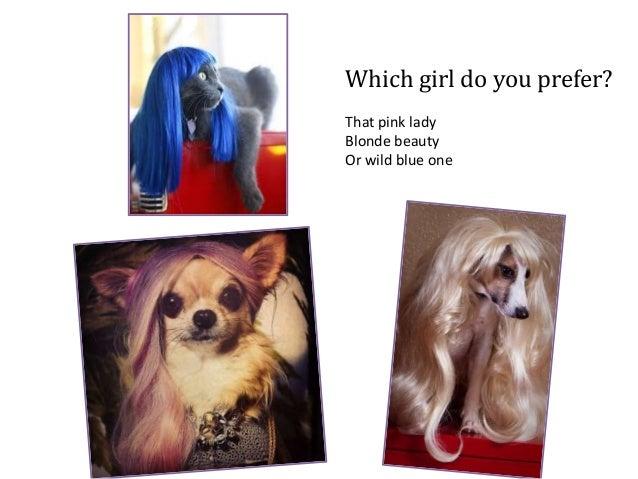 Cute animal wigs