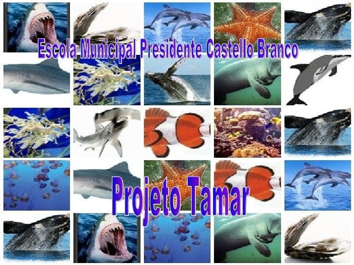 Escola Municipal Presidente Castello Branco Projeto Tamar