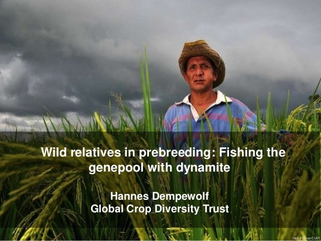 Neil Palmer/CIATWild relatives in prebreeding: Fishing thegenepool with dynamiteHannes DempewolfGlobal Crop Diversity Trust