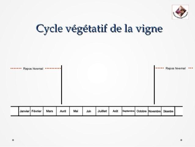 Cycle végétatif de la vigneRepos hivernal                        Repos hivernal