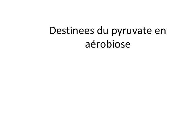 Destinees du pyruvate enaérobiose