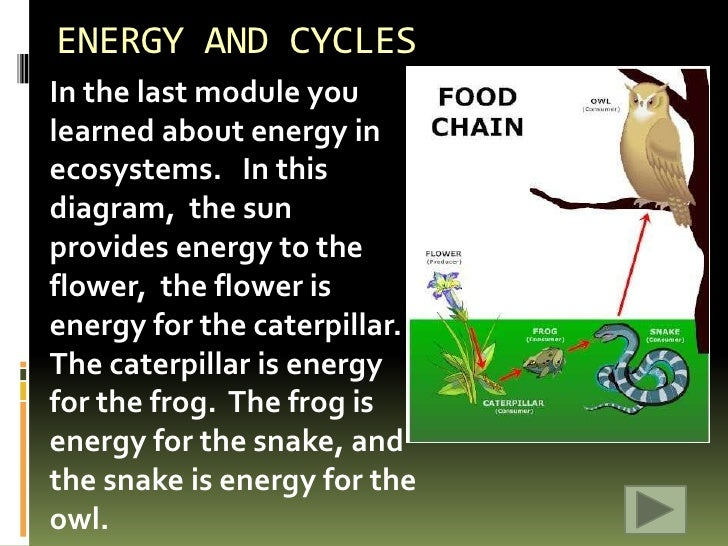 cycles of matter Cycles of matter activity purpose: to trace water and nutrients through the ecosystem materials: cycle sheets, colored pencils, textbook procedures.