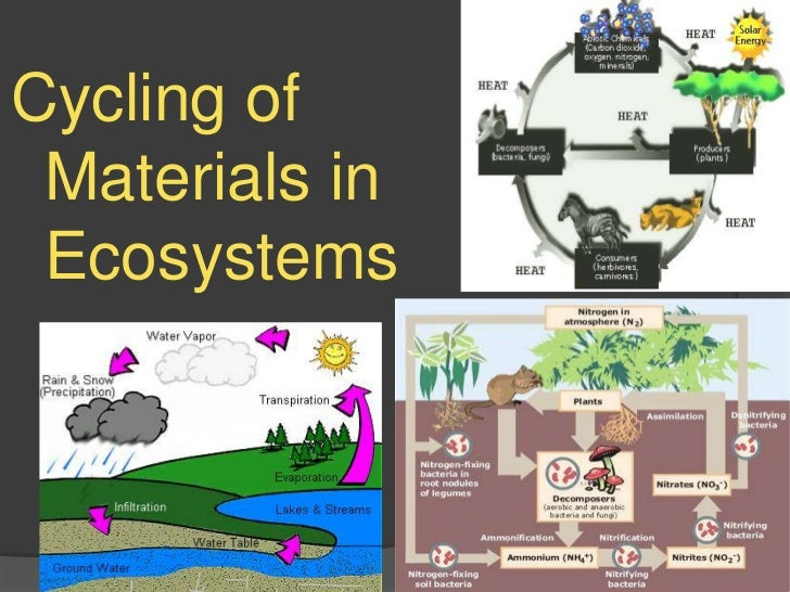 Cycling of materials in ecosystem