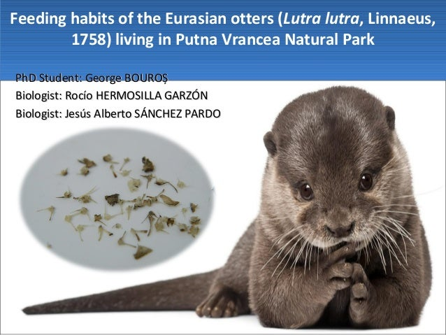 Feeding habits of the Eurasian otters (Lutra lutra, Linnaeus, 1758) living in Putna Vrancea Natural Park PhD Student: Geor...