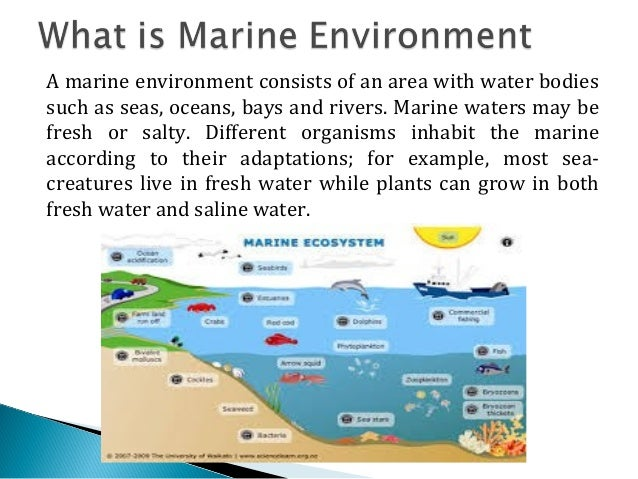 definition and analysis of marine pollution environmental sciences essay Environmental pollution, problems and control measures a introduction and definition of environmental pollution - we know that, a living organism cannot live by itself organisms interact among themselves.