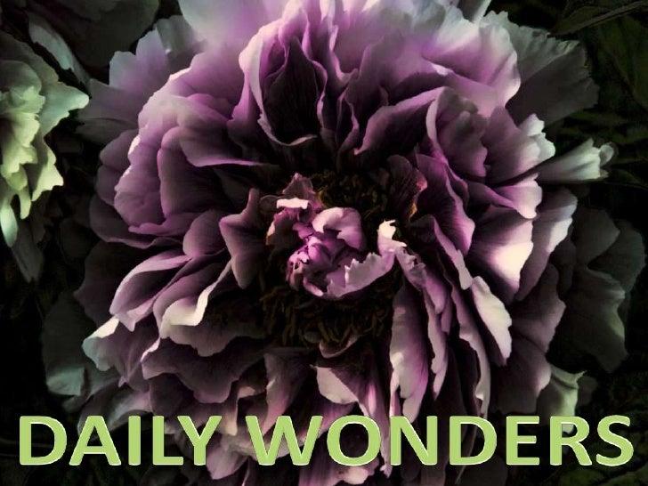 Daily Wonders