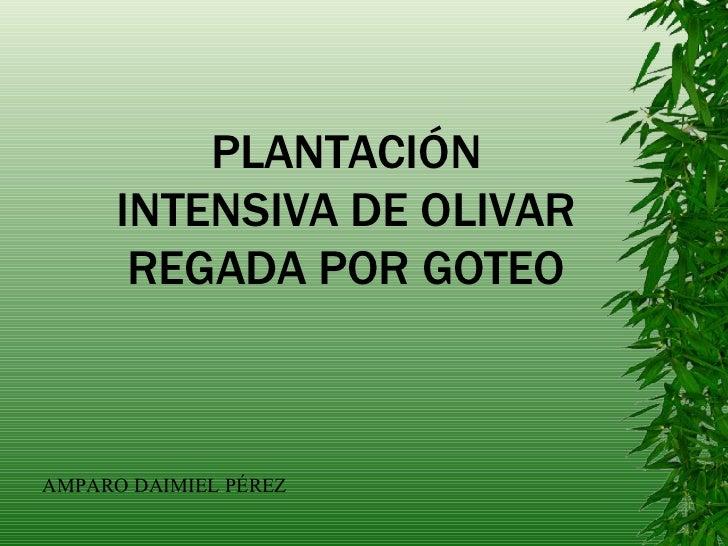 PLANTACIÓN INTENSIVA DE OLIVAR REGADA POR GOTEO AMPARO DAIMIEL PÉREZ