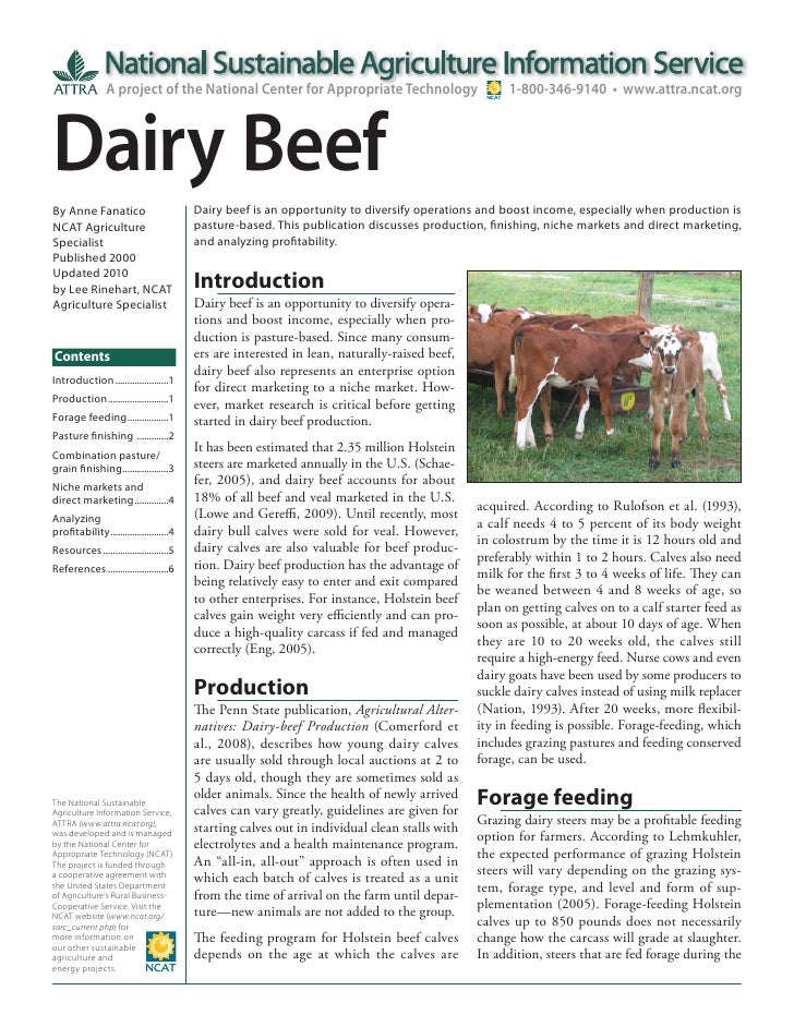 Dairy Beef