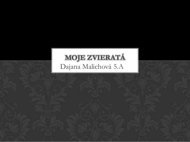 Dajana Malichová 5.AMOJE ZVIERATÁ