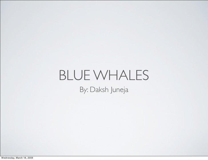 Daksh Blue Whale