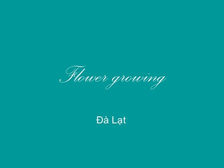 Flower growing    Đà Lạt