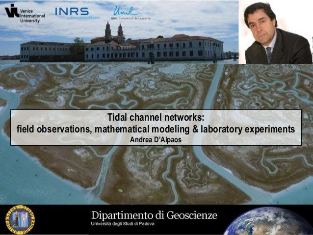 Tidal networks geomorphology
