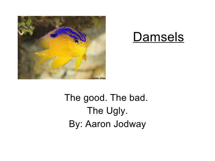 Damsels The good. The bad.  The Ugly. By: Aaron Jodway