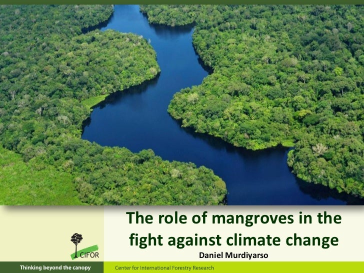The role of mangroves in thefight against climate change         Daniel Murdiyarso