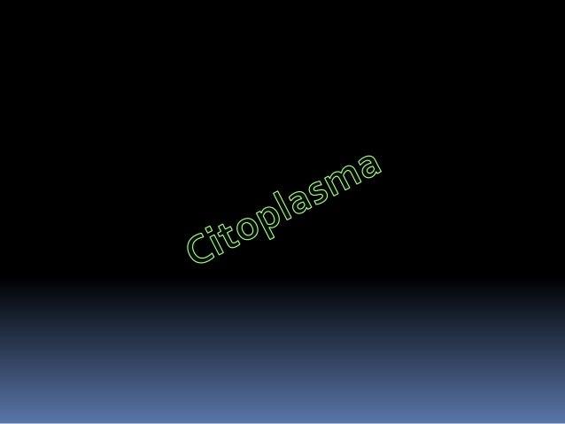 El citoplasma es la parte delprotoplasma que, en una célulaeucariota, se encuentra entre el núcleocelular y la membrana pl...