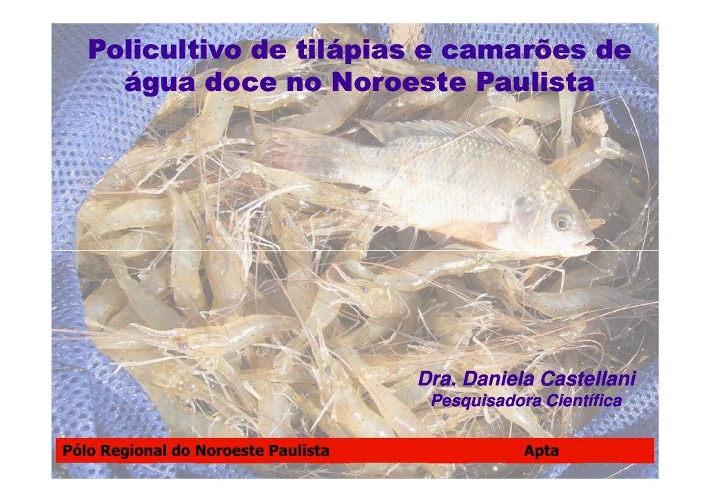 Policultivo de Tilápias e Camarões de Água Doce no Noroeste Paulista