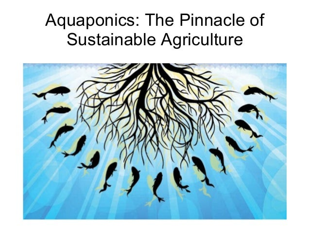 Aquaponics: The Pinnacle of Sustainable Agriculture