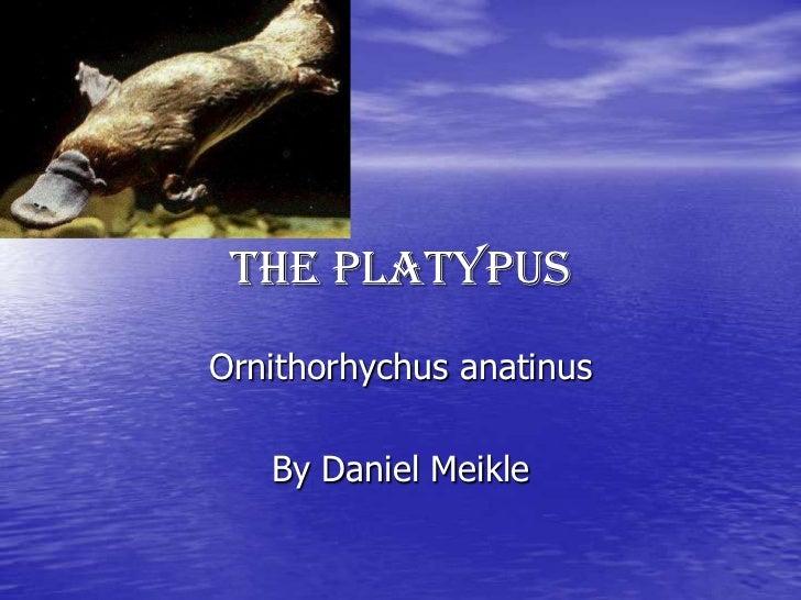 The PlatypusOrnithorhychus anatinus   By Daniel Meikle