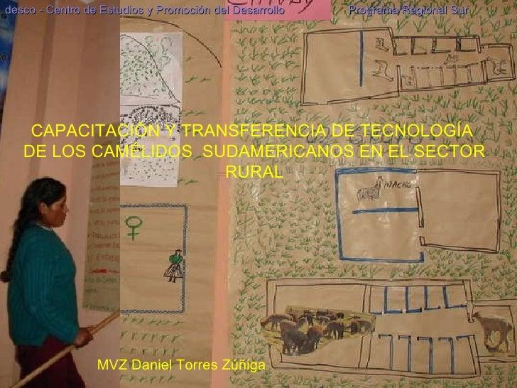 CAPACITACIÓN Y TRANSFERENCIA DE TECNOLOGÍA  DE LOS CAMÉLIDOS  SUDAMERICANOS EN EL SECTOR RURAL desco - Centro de Estudios ...