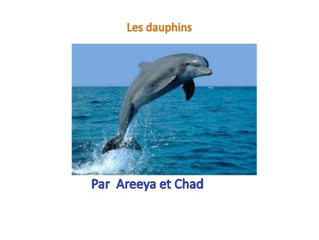 Apparence physique Les dauphins ne dorment pas du tout la nuit. Ils nagent beaucoup et puis les dauphins se reposent.