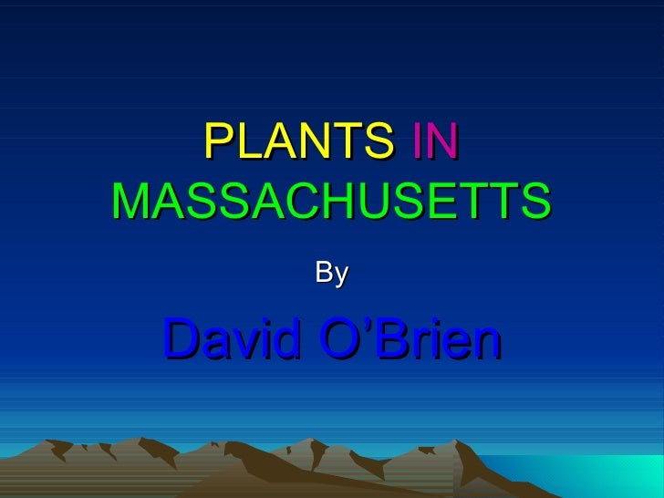 PLANTS   IN   MASSACHUSETTS By David O'Brien