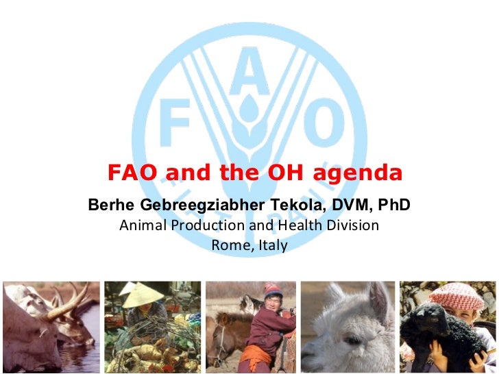 FAO and the OH agenda B erhe Gebreegziabher Tekola, DVM,   PhD Animal Production and Health Division Rome, Italy